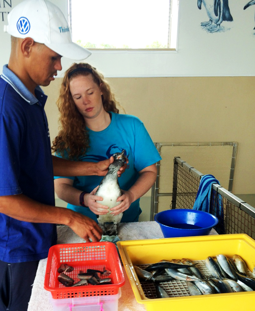 Bethany researches shark conservation, embryo development in fish, and more.