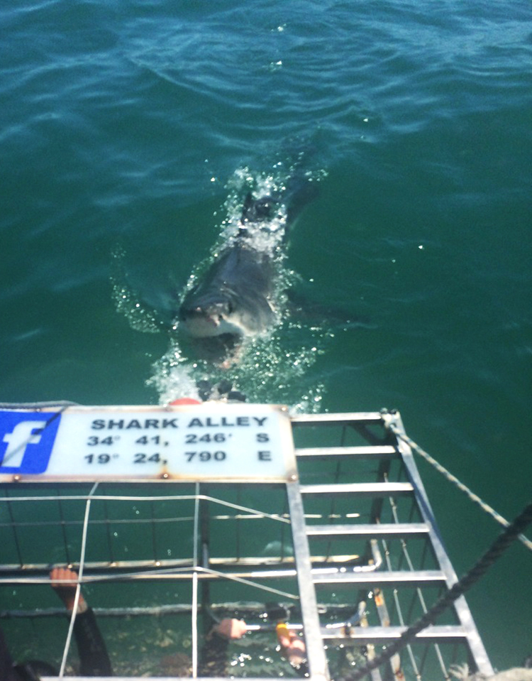 Bethany's research grant brought her to Gansbaai, South Africa to research Great White Shark conservation. PHOTO COURTESY OF BETHANY ROSEMORE.