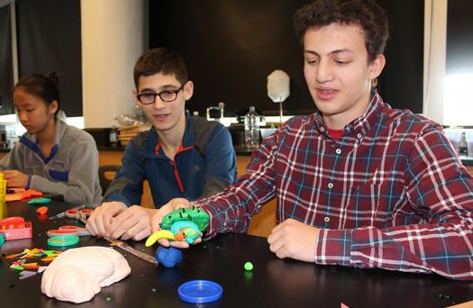 Students created Play-Doh brain models.