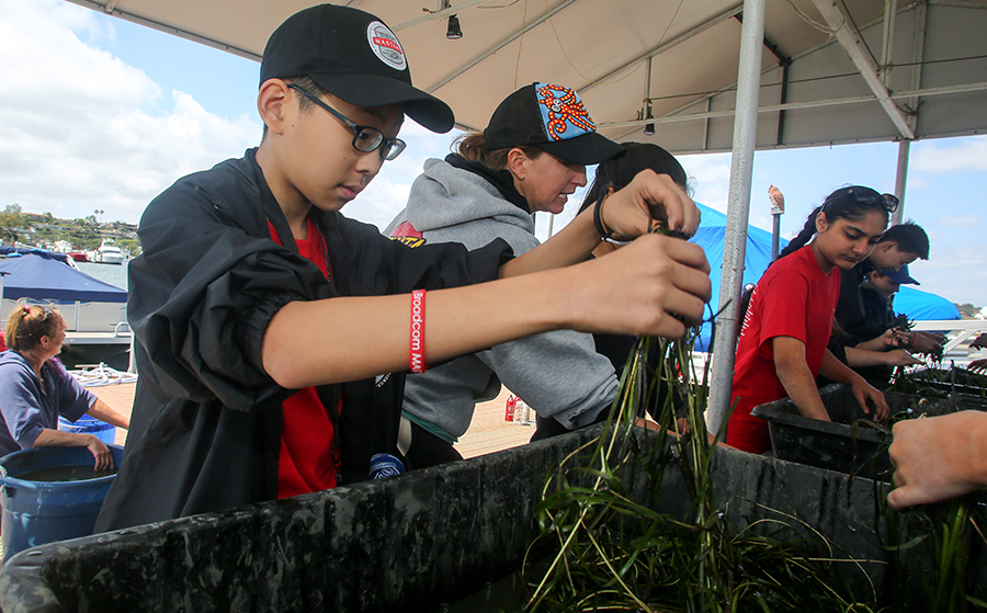Jun Young Kim, from South Korea, takes time to pull apart eelgrass in the Newport Beach harbor so it can be replanted.