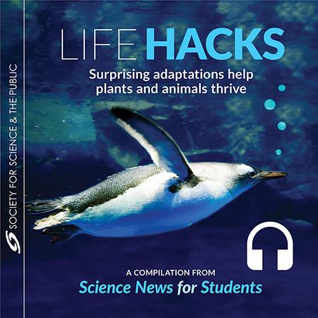 Free Audiobook - Life Hacks