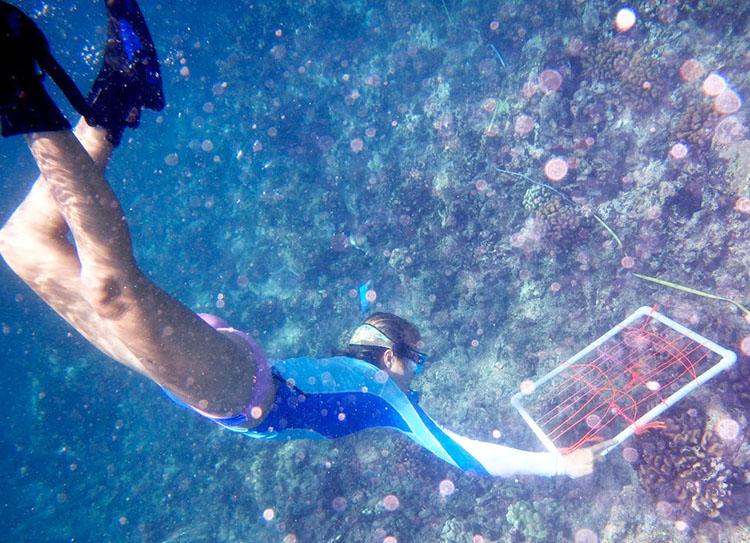Meghan studies coral reefs in Hawaii.