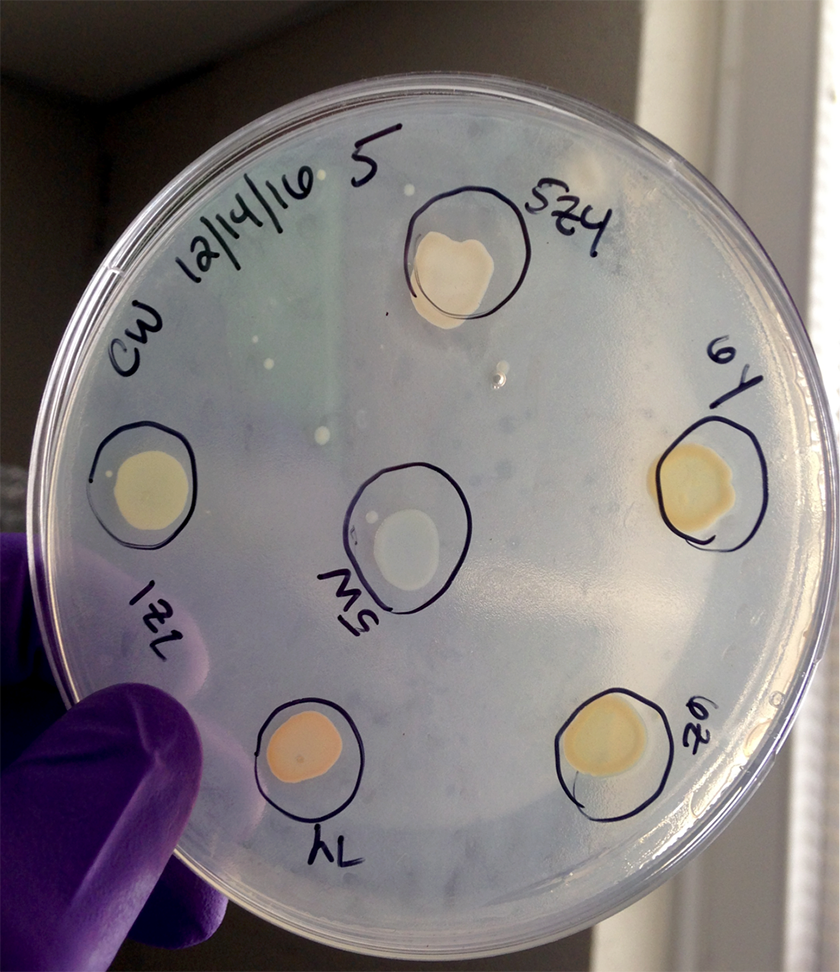 Claire studies bacteria in streams.