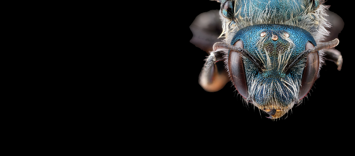 banner insect head macro