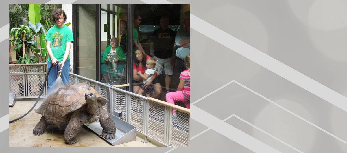 River Grace researches tortoises dancing during rain.