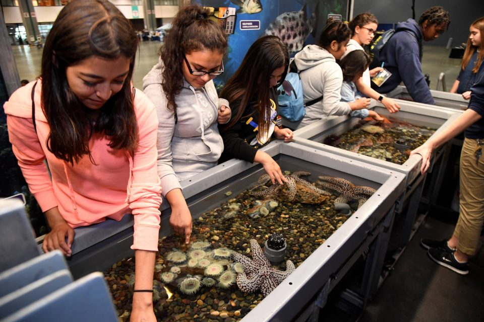 Student at the 2017 ISEF Education Outreach Day interacting with the touch pool of the Aquarium of the Pacific.