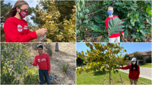 grid of four images- Broadcom MASTERS 2020 finalists collecting leaves