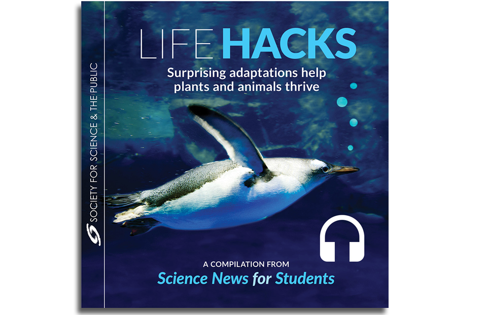 Lifehacks Audiobook