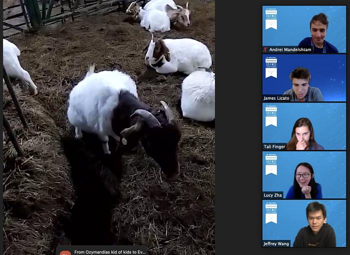 Regeneron STS 2021 goat movement break zoom grid