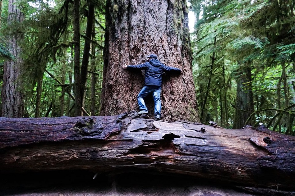 An 800-year-old Douglas fir on Vancouver Island, Canada.Credit...Matthew Bailey/VWPics/Universal Images Group, via Getty Images