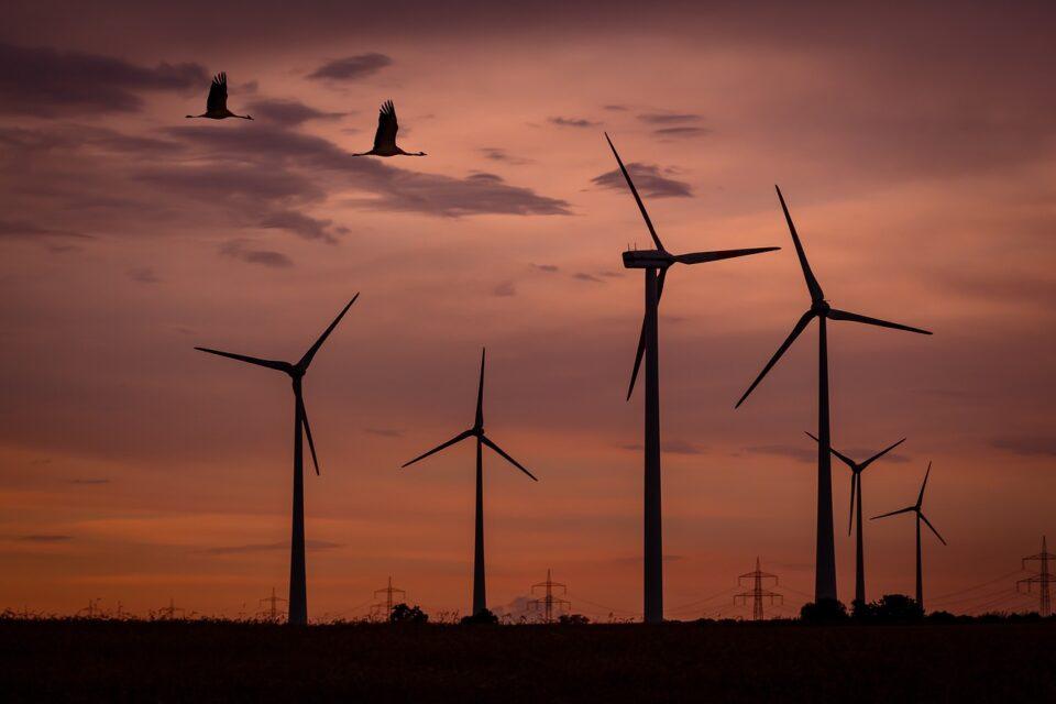Birds flying near wind turbines